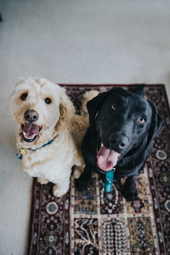 Know how to prepare your NY apartment for a pet